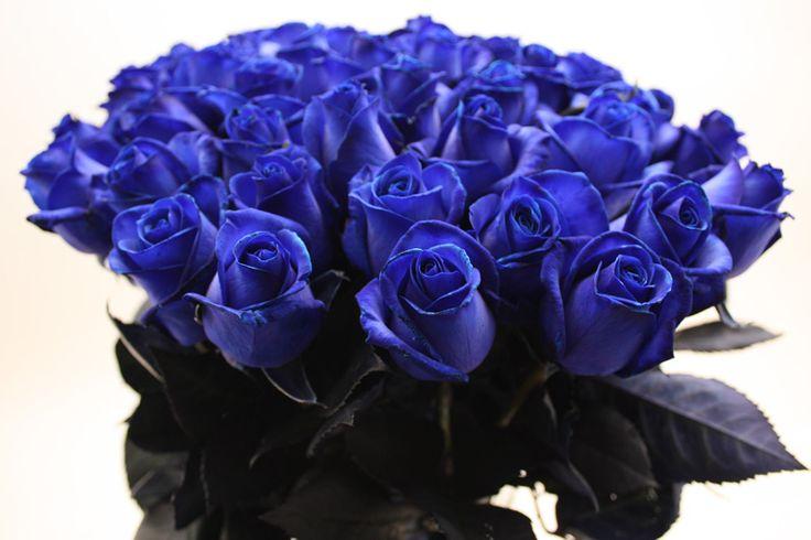 Blauwe rozen kopen en bezorgen in heel Nederland en België.