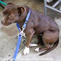 Canine distemper virus dog.