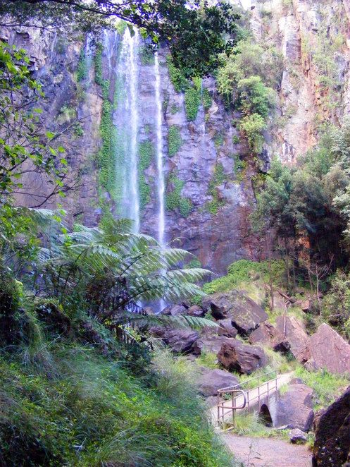 Queen Mary falls is a spectacular 40 metre waterfall accessible from the Spring Creek Road 10 kms from Killarney. Viewing the falls requires only a short stroll down a well maintained track or you can also do a slightly longer 2 km circuit down to the base of the falls.