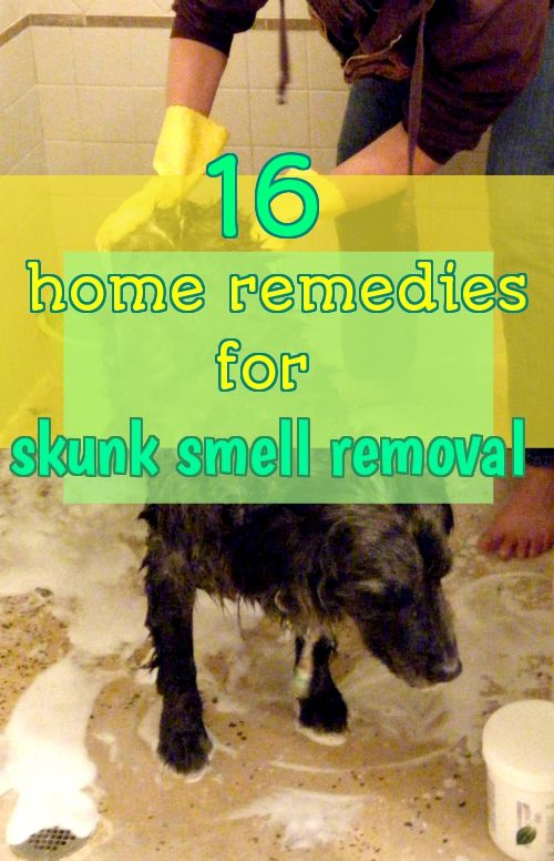 how to get skunk smell out of house