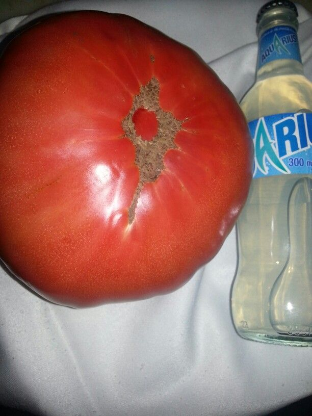 Tomato in Seoane restaurant Madrid