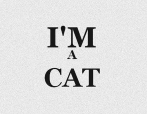 !: Cats, Meow, I M, Style, Quotes, Crazy Cat, Chat, Kitty, Cat Lady