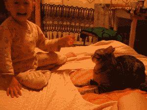 pudimos-sereternos:  clauudianatacha:  chilewebeopuntocom:  gato ql….y ke wea ctm!!!  Jkajdksk el gato se enojo un pokito  por weon JKFJFLJASSKSFKDJNDKSJADKLGDS