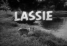 Lassie - another wonderful show.  Honestly, anything involving animals had me from the start.