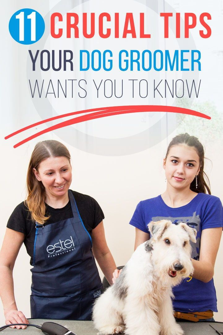 11 Crucial Tips Your Dog Groomer Wants You To Know Dog Grooming