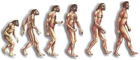 Morfológicamente el homo rhodesiensis conserva ciertos rasgos antiguos comunes al Homo erectus, Homo ergaster y Homo antecessor, tiene otros que han permitido relacionarlo con el Homo heidelbergensis y Homo neanderthalensis, pero además presenta rasgos que apuntan hacia el Homo sapiens. Según Tim White es muy probable que H. rhodesiensis sea antepasado de Homo sapiens idaltu, y probablemente descendería de la población africana de Homo antecessor.