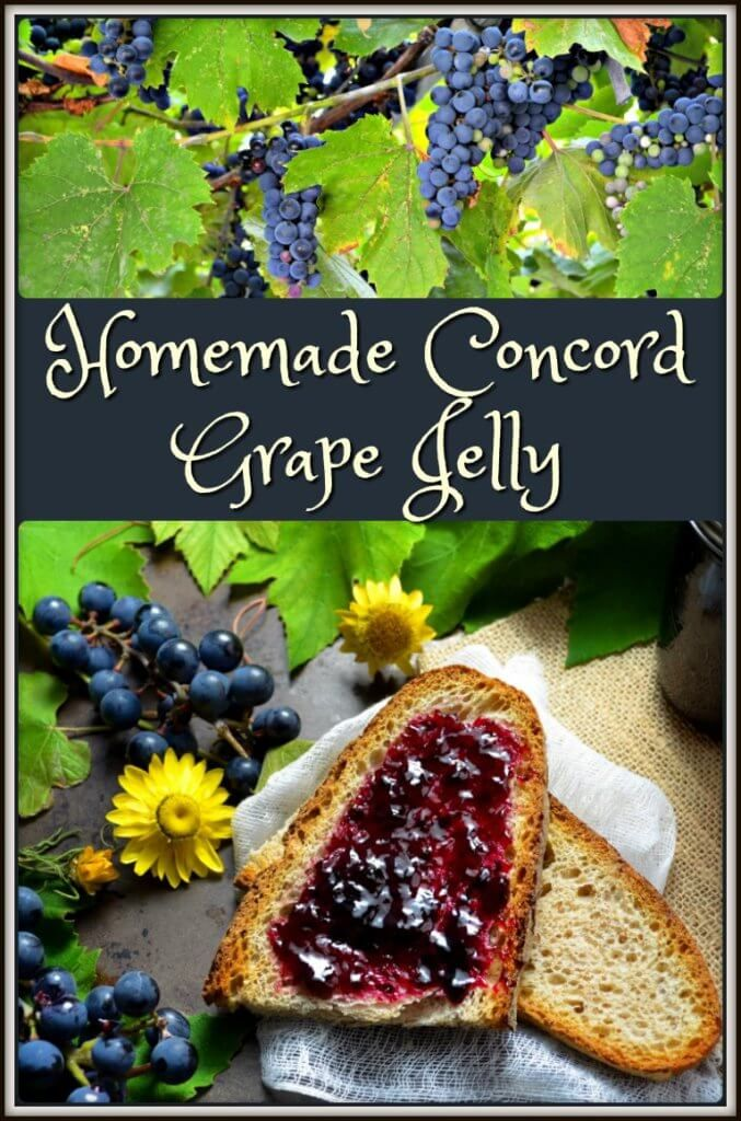 Nothing says fall like this Homemade Concord Grape Jelly. Intoxicating aroma, jewel-like color & the sweet-tart taste appeals to all your senses.