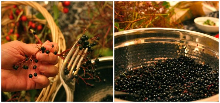 Making Elderberry wine is easier than you think! You need a bit of equipment, elderberries, sugar, lemons, yeast-- and time to let it develop. Delicious.