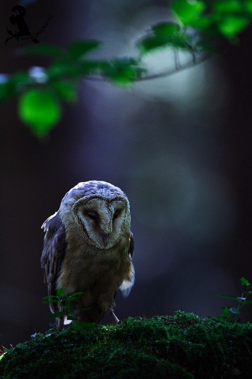 wonderous-world:  Owl byJiri Michal