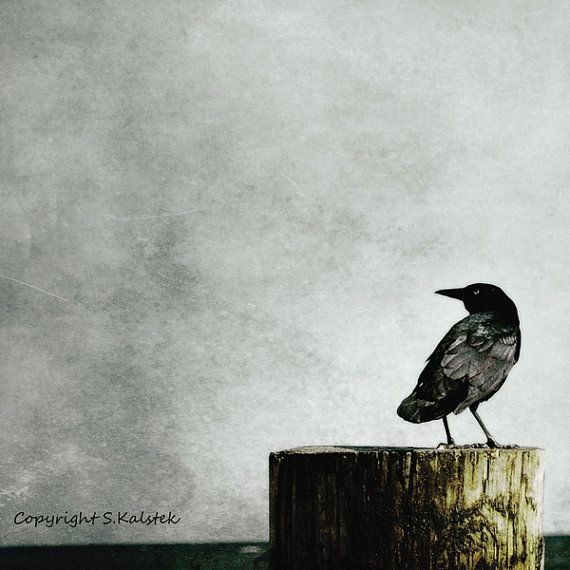 Crow Photography Sea Crow Muted black gray wall art Beach Coastal Shore Crow Print 8x8