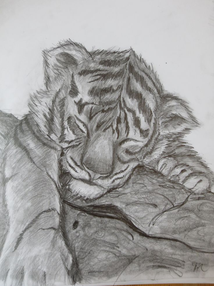 Baby Tiger for @laurelperdue by Maggie Rice. Here you go! I probably could have put more detail into it, but  I just needed to finish it. XP