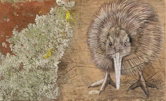 Giclée print of New Zealand Kiwi bird on rustic by KanukaGlen.  This giclée print is of a highly original rendition of a New Zealand Kiwi bird using top quality coloured pencils upon a recycled rustic piece of macrocarpa timber.   The Kiwi stands on the timber as though it were at home in it's natural surroundings. He's got his eyes on you! The timber was chosen for it's beautiful covering of lichen giving it an incredibly rustic feel.