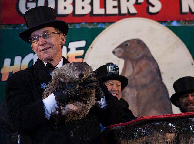 12. We've got the original weather forecasting groundhog.