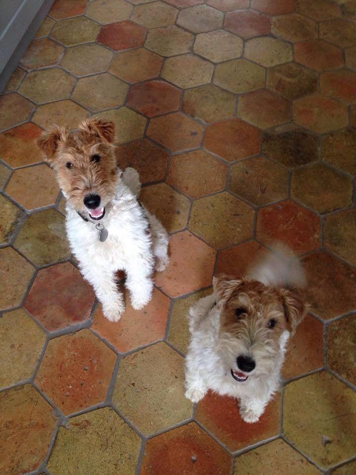 57 besten Dogs that fill me with unconditional love! Bilder auf ...