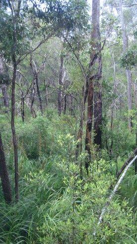 Rainforest, Fraser Island QLD
