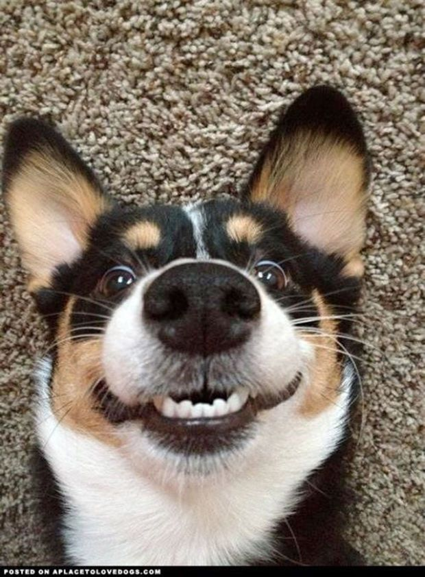 Best CUTE DOG PICTURES Images On Pinterest - 29 adorable animals that will leave you smiling for the rest of the day
