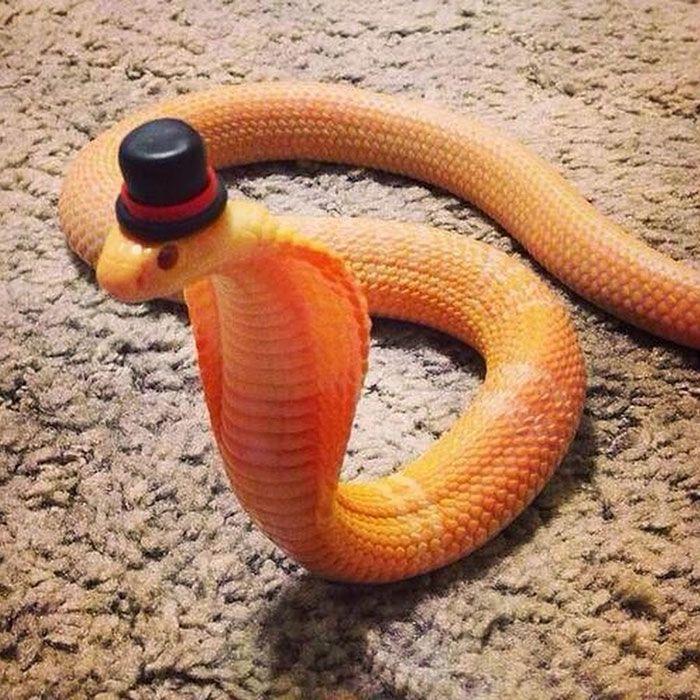 Serpientes con sombrero, la sensación del momento. | Quiero más ...