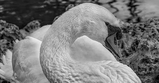 Los cisnes salvajes.  Parte 1º.   Hans Christian Andersen