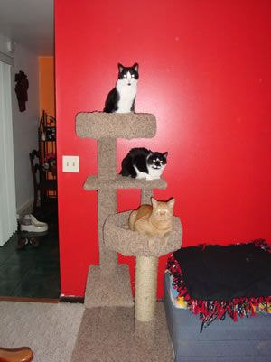 115 best images about cat tree houses on pinterest silk for Do it yourself cat condo