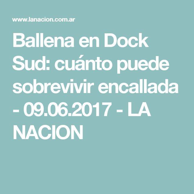 Ballena en Dock Sud: cuánto puede sobrevivir encallada - 09.06.2017 - LA NACION