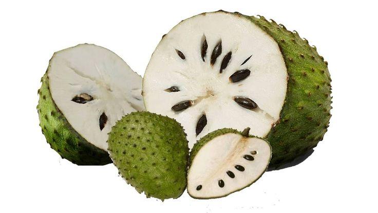 На рынках и прилавках супермаркетов Филиппин часто можно встретить интересный зеленый плод с колючками. Гуябано, или сметанное яблоко – суперфрукт, обладающий удивительными качествами.   Он имеет грушевидную форму зеленого цвета. Под тонкой кожицей размещается мягкая, мясистая мякоть с ярко выраженным сметанным привкусом.  Интерес к этому растению связан с его сильным противораковым действием. Исследования показали, что экстракт гуябано оказался эффективен при лечении 12 типах опухолей…