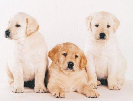 honden tekenen in stappen - Google zoeken