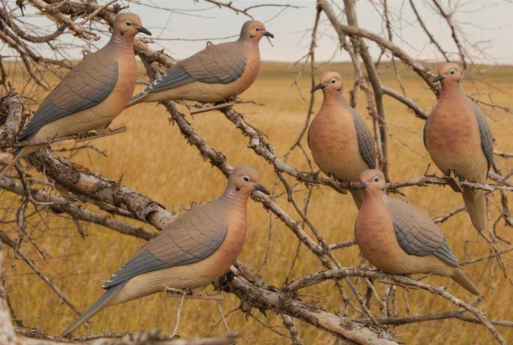 Best 25 Dove Hunting Gear Ideas On Pinterest Dove
