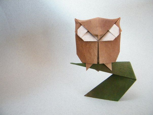 Сборка оригами. Сова на ветке