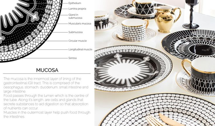 Of Note: Anatomy of Digestion Dining Set (With images ...