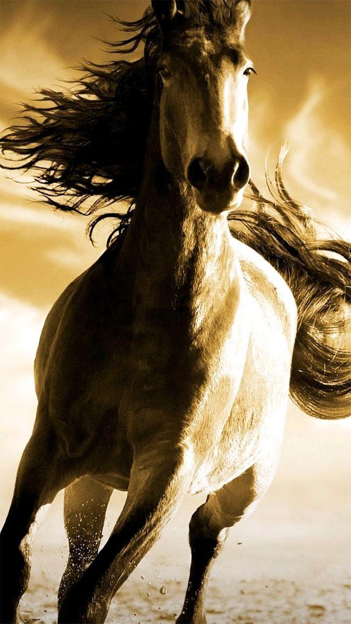 Pin By Greg Evans On Horses More 14 Full Horses Running Horses Horse Wallpaper
