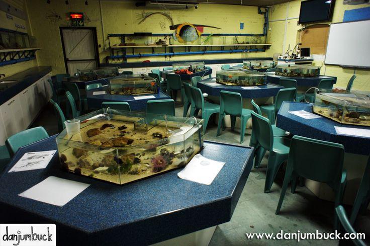 Classroom Aquarium Ideas : Best images about touch tanks on pinterest mystic