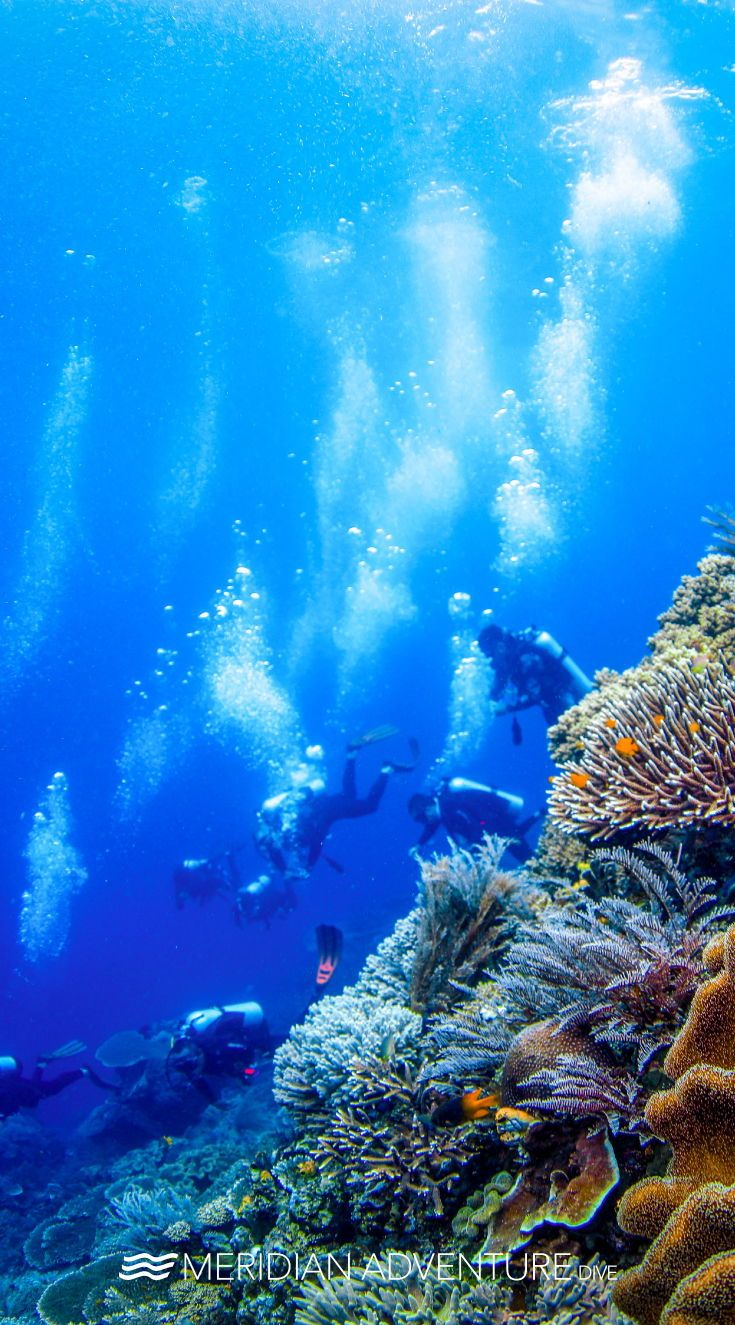 Diving Is Like Coffee I Am A Better Person After One Who Agrees Scubadiving Indonesia Rajaampat Scuba Diving Diving Scuba
