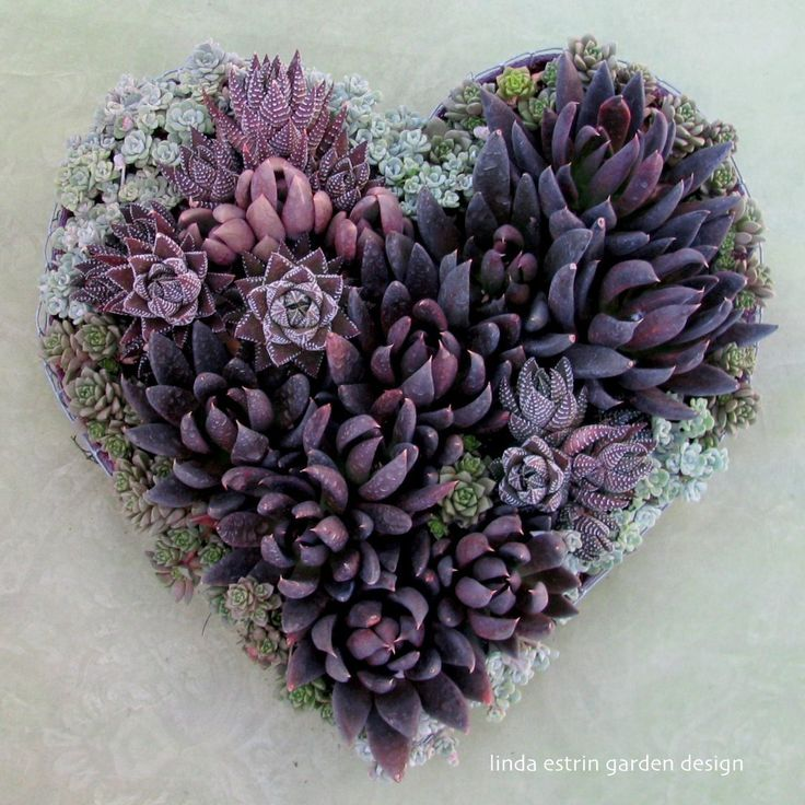 """Only do what your heart tells you."" - Princess Diana. Design by Linda Estrin Garden Design."