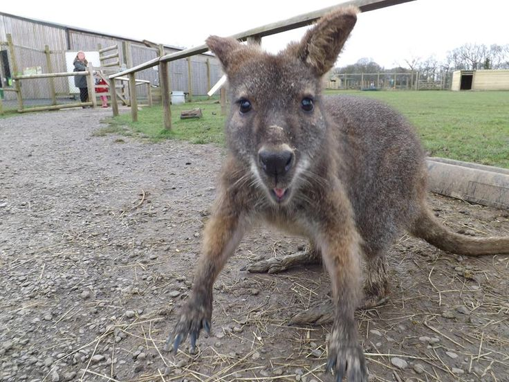 #KnockhatchCaption #wallaby : Do you have a caption to add to this photo? >>>