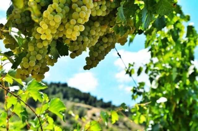 """Food und Wein Wochenende! Ein Ausflug für diejenigen, die Natur und gutes Essen lieben. Buchen Sie dieses Paket für Etna Trail Veranstaltung! """"Super-Marathon des Ätna"""" - von 0 bis 3000 Meter Höhe - 10. Jun 2017!  #sicily #weine #events #etna"""