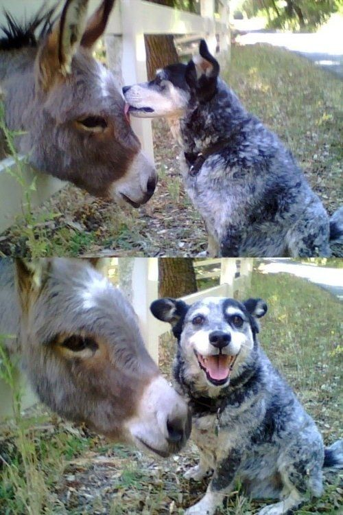 These two just met for the first time, but they are already buddies. | 26 Things That Will Turn Your Bad Day Around In An Instant