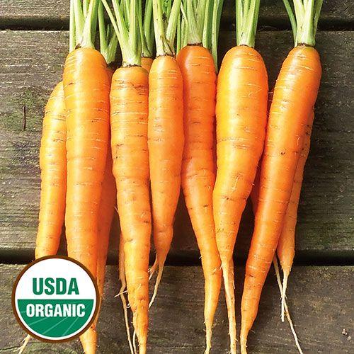 18 Best Cool Season Crops Images On Pinterest Organic 640 x 480
