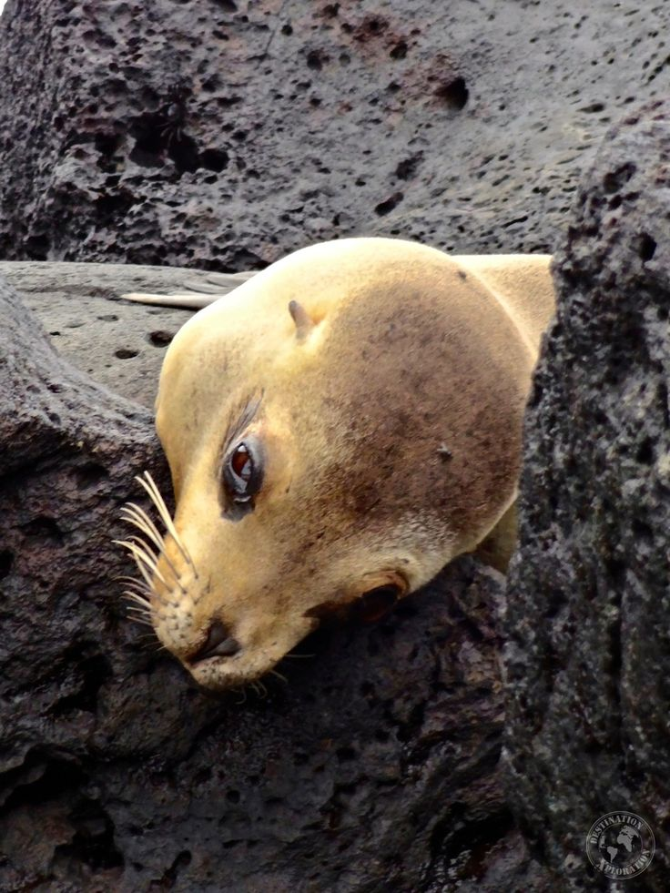Sea lion in the Galapagos. Explore the Galapagos budget style with GAdventures Galapagos Cruise