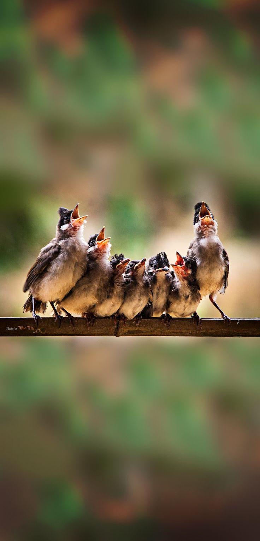 """Let's all sing like the birdies sing...."""