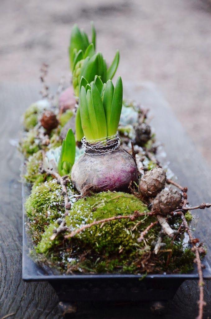 """Hyacinter med """"halsband"""" av silvrig buljongtråd, så enkelt och fint...      Hej Hopp!      Dagen innan den stora Dagen och allt ska..."""