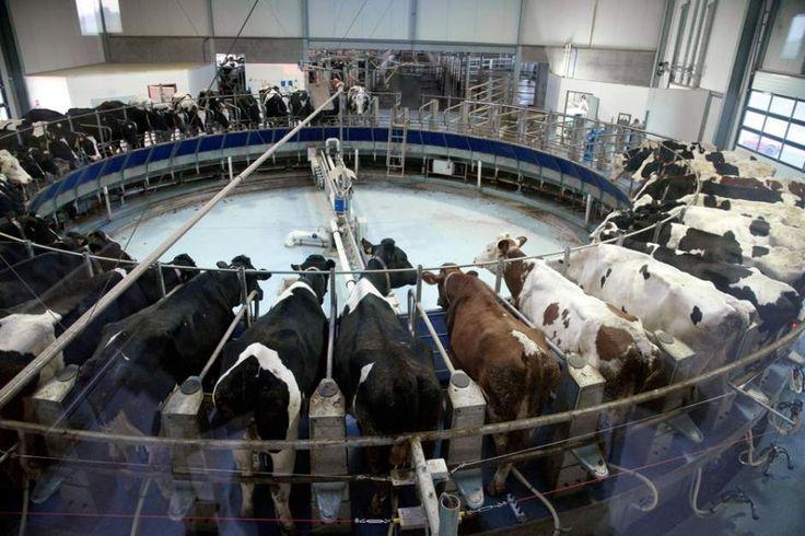 Une nouvelle enquête publique s'ouvre ce 2 novembre, pendant un mois, concernant l'extension du cheptel de la ferme-usine dite des « mille vaches ». Elle porte sur l'autorisation de passer de 500 à 880 vaches laitières et « vise à assurer la complète...