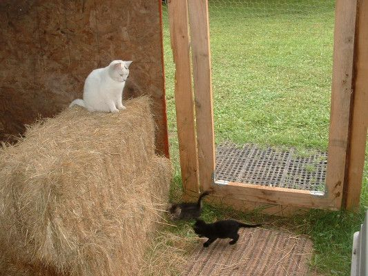 Where Do I Get A Ferrel Cat Cage