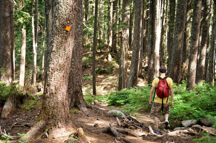 Pacific Crest Trail inspires long-distance hikes in B.C.