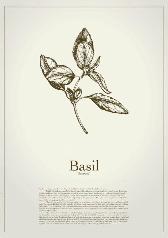 Basil illustration poster - Design Individuals