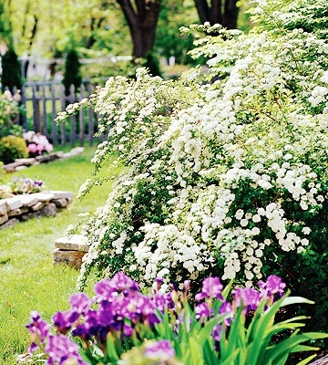 Spirea · Spirea ShrubBridal WreathsLow Light ... & 93 best My Garden images on Pinterest | Garden plants Plants and ... azcodes.com