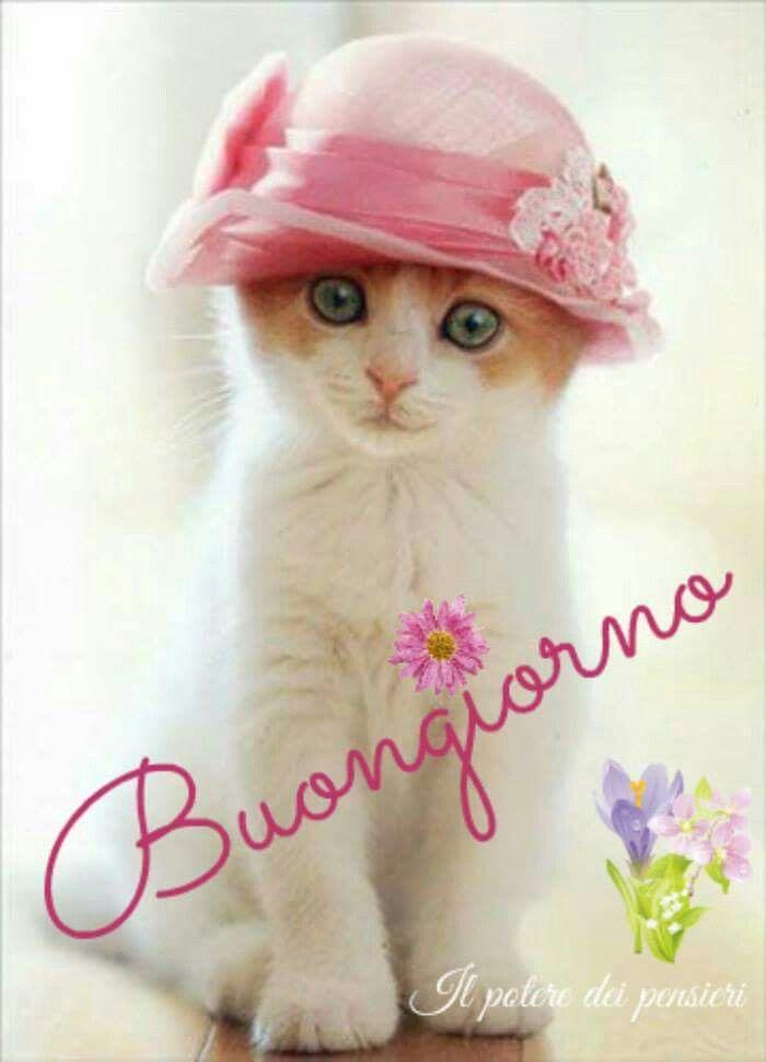 Buongiorno gatto kotki buongiorno buongiorno immagini for Buongiorno con gattini