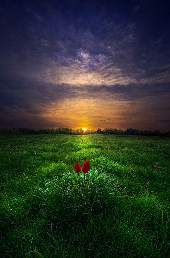 A pair of tulips watch the sun rise over Wisconsin, by Phil Koch on 500px http://500px.com/photo/71059113/you-and-i-by-phil-koch