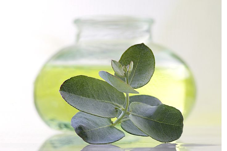#EucalyptusOil Recent studies show that eucalyptus oil has healing abilities to fight bacterial infections more than some antibiotics.