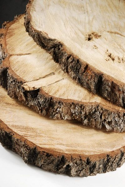 Tree slice wood slab round quot with bark awesome
