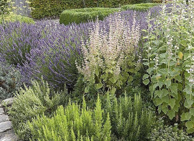 les 144 meilleures images du tableau herbes aromatiques. Black Bedroom Furniture Sets. Home Design Ideas